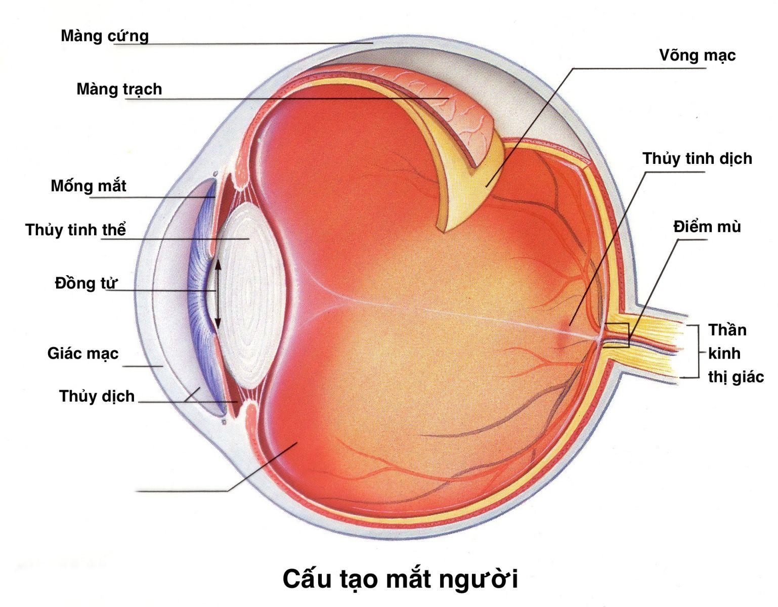 thay võng mạc mắt