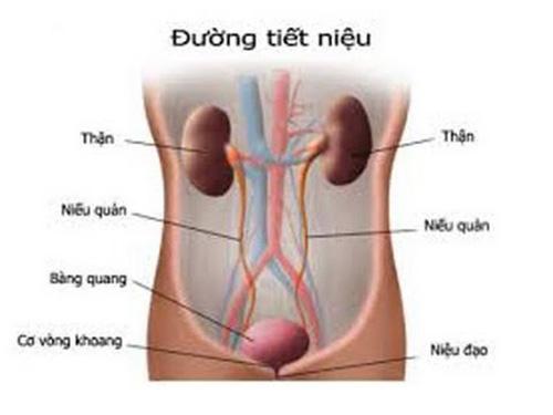 Tiểu són mắc bệnh gì và cách điều trị bệnh tiểu són
