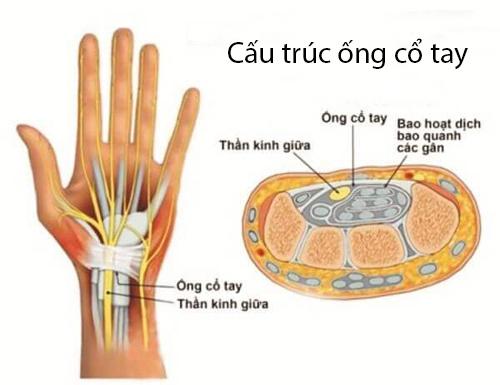 cấu trúc ống cổ tay