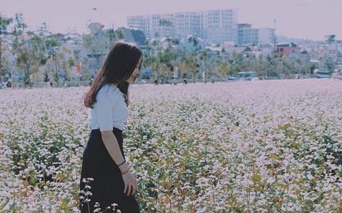 Hoa tam giác mạch Tà Nung – bừng nở nơi phố núi