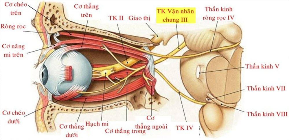chẩn đoán đau dây thần kinh hốc mắt